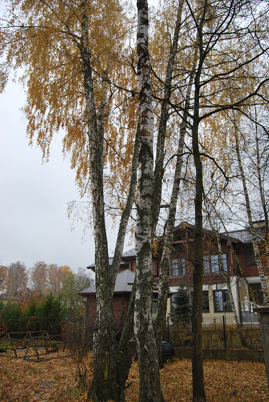 смета на опиловку деревьев образец - фото 6